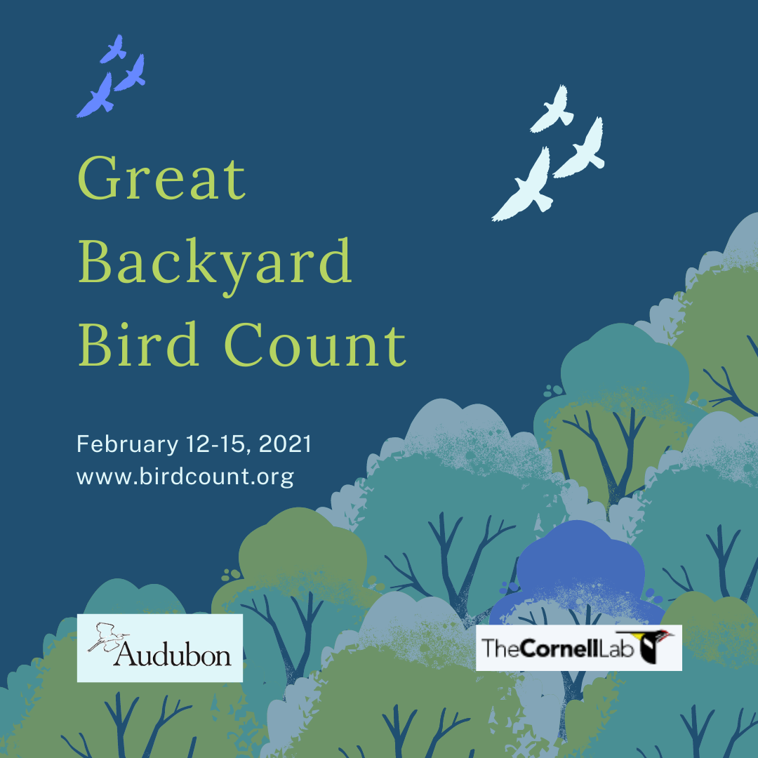 It's Almost Time for the Great Backyard Bird Count!